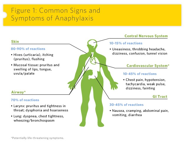 Common Signs and Symptoms of Anaphylaxis – Central Nervous System: 10-15% of reactions (Uneasiness, throbbing headache, dizziness, confusion, tunnel vision) | Skin: 80-90% of reactions (Hives (urticaria), itching (pruritus), flushing) (Mucosal tissue, pruritus and swelling of lips, tongue, uvula/palate) | Cardiovascular System: 10-45% of reactions (Chest pain, hypotension, tachycardia, weak pulse, dizziness, fainting) | Airway: 70% of reactions (Larynx: pruritus and tightness in throat, dysphonia and hoarseness) (Lung: dyspnea, chest tightness, wheezing/bronchospasm) | GI Tract: 30-45% of reactions (Nausea, cramping, abdominal pain, vomiting, diarrhea)/